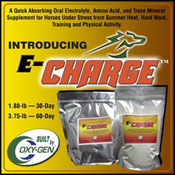 ECharge electrolyte and amino acid powder for horses by OxyGen