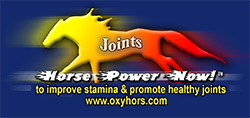 Horse Power Now for Joints performance paste