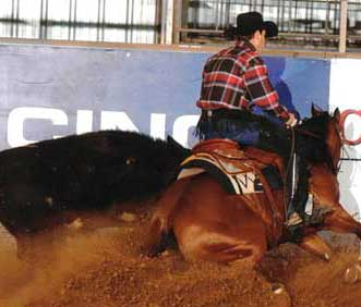 robert chown working cow horse champion extreme gi care testimonial